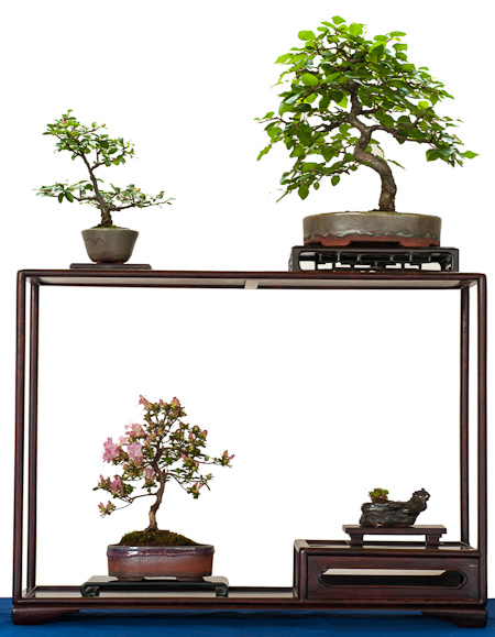 Display mit Shohin-Bonsai