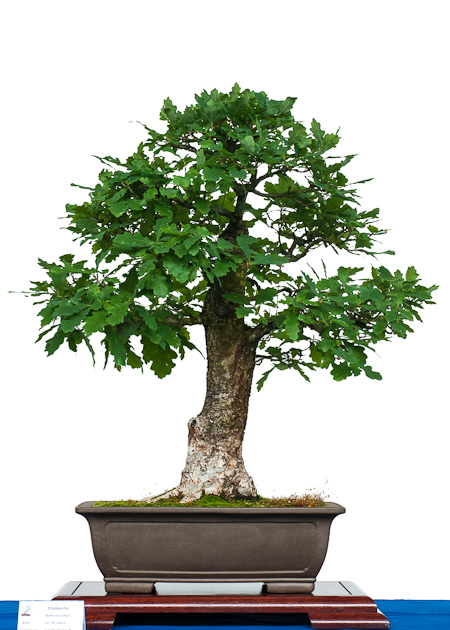 fotos von der bonsai fr hjahrsausstellung des ak aichtal filder 2012 teil 2. Black Bedroom Furniture Sets. Home Design Ideas