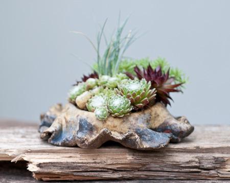 Akzentpflanze mit Sabi