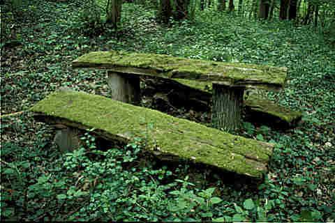 alte Holzbank width=