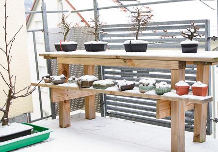 Bonsairegal mit Schnee