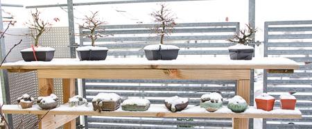 Bonsai im Schnee