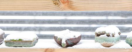 Akzentpflanzen im Schnee