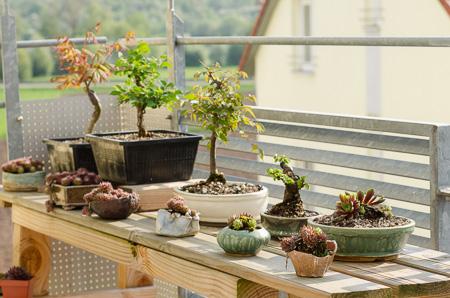 Balkon April 2013 mit Bonsai