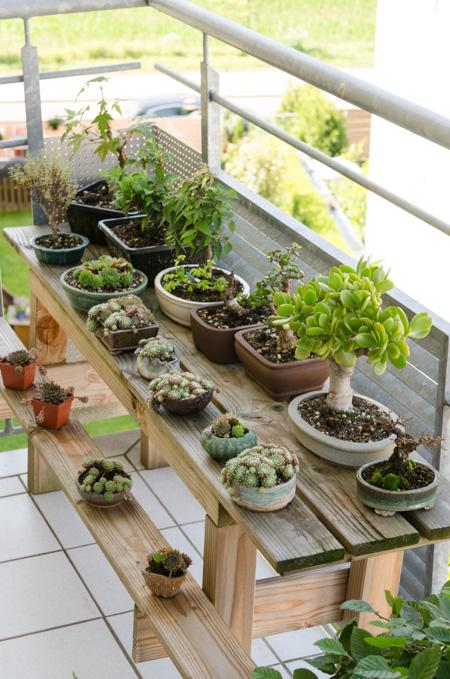 bonsai und pflanzen auf dem balkon. Black Bedroom Furniture Sets. Home Design Ideas