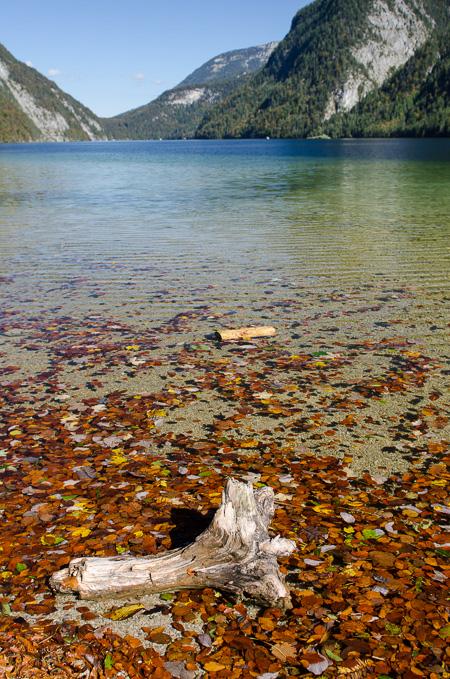 Königssee mit alten Baumstamm
