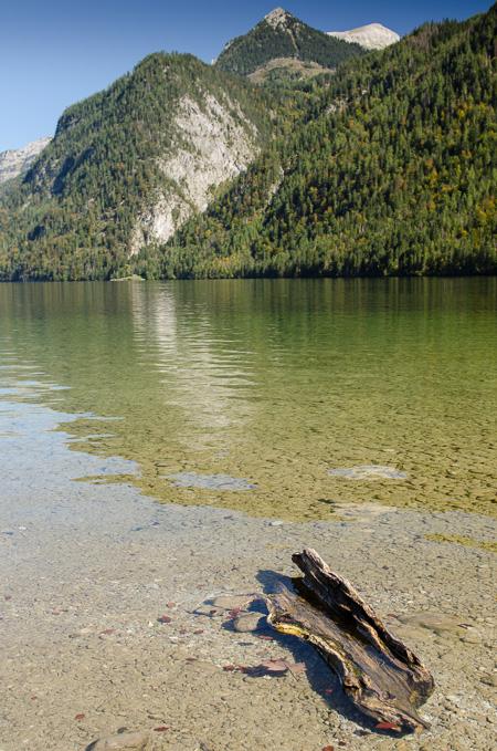 Baumrinde im See