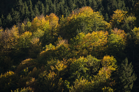 Bergwald im Oktober