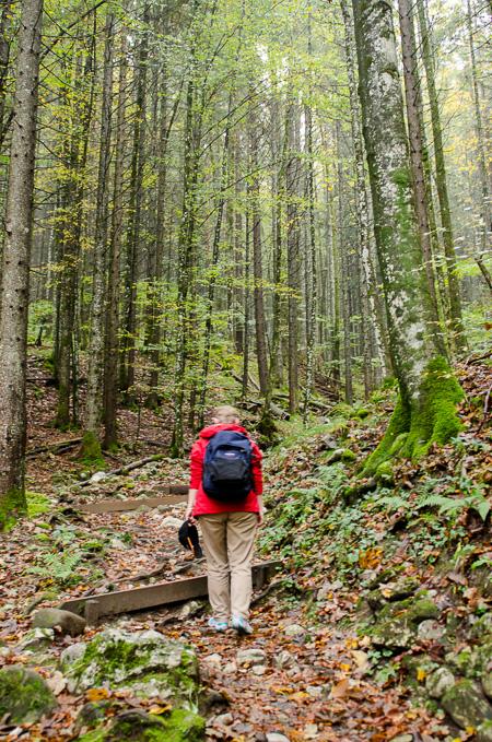Waldaufstieg nach Ettenberg
