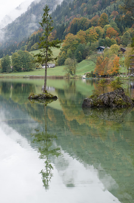 Nadelbaum auf einem Felsen im See