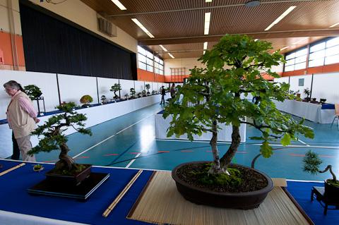 Bonsai-Ausstellung AK Aichtal-Filder