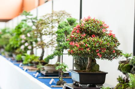 Bonsaiausstellung 2013 in Aichtal-Grötzingen
