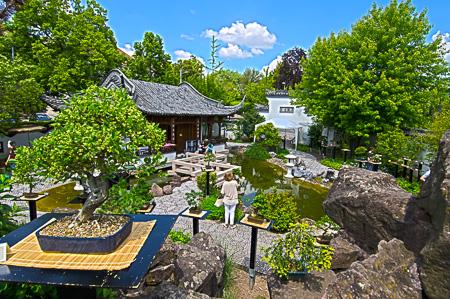 Bonsaiausstellung im chinesischen Garten