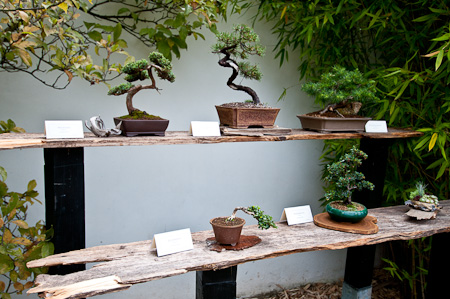 bonsai ausstellung im chinesischen garten stuttgart. Black Bedroom Furniture Sets. Home Design Ideas