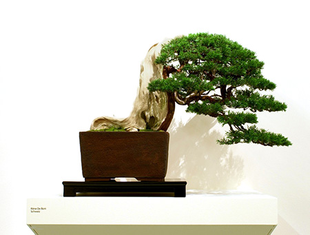 Juniperus sabina bearbeitet