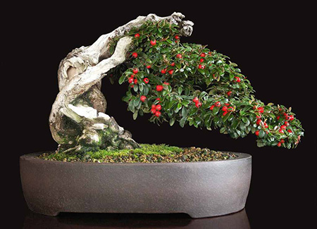 Bonsai substrat
