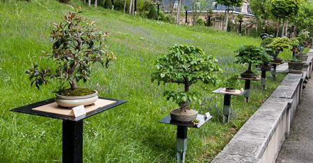Blick auf Bonsaibäume