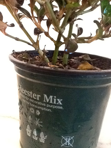 Pflanze von Lukas #2