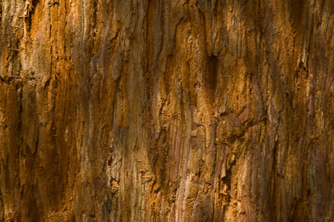 Rinde Redwood