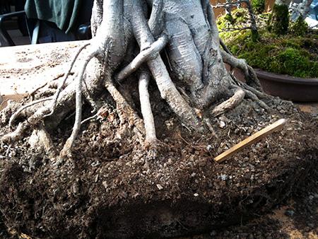 Lockern des Substrat mit einem Eßstäbchen