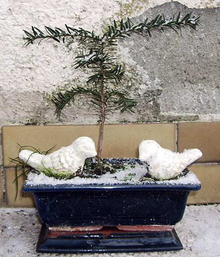 unbekannter Nadelbaum #3