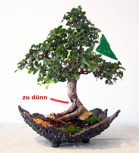 Chinesische Ulme