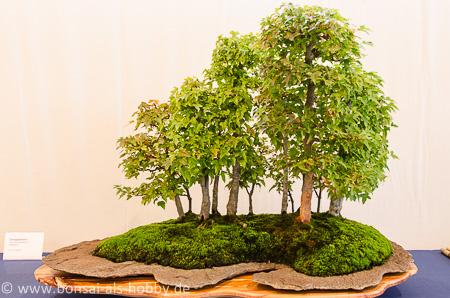 bonsaiausstellung in weil der stadt teil 2. Black Bedroom Furniture Sets. Home Design Ideas