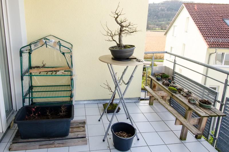 outdoor bonsai berwintern wanderfreunde hainsacker. Black Bedroom Furniture Sets. Home Design Ideas