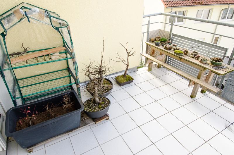 Outdoor-Bonsai und Akzentpflanzen im Dezember 2013