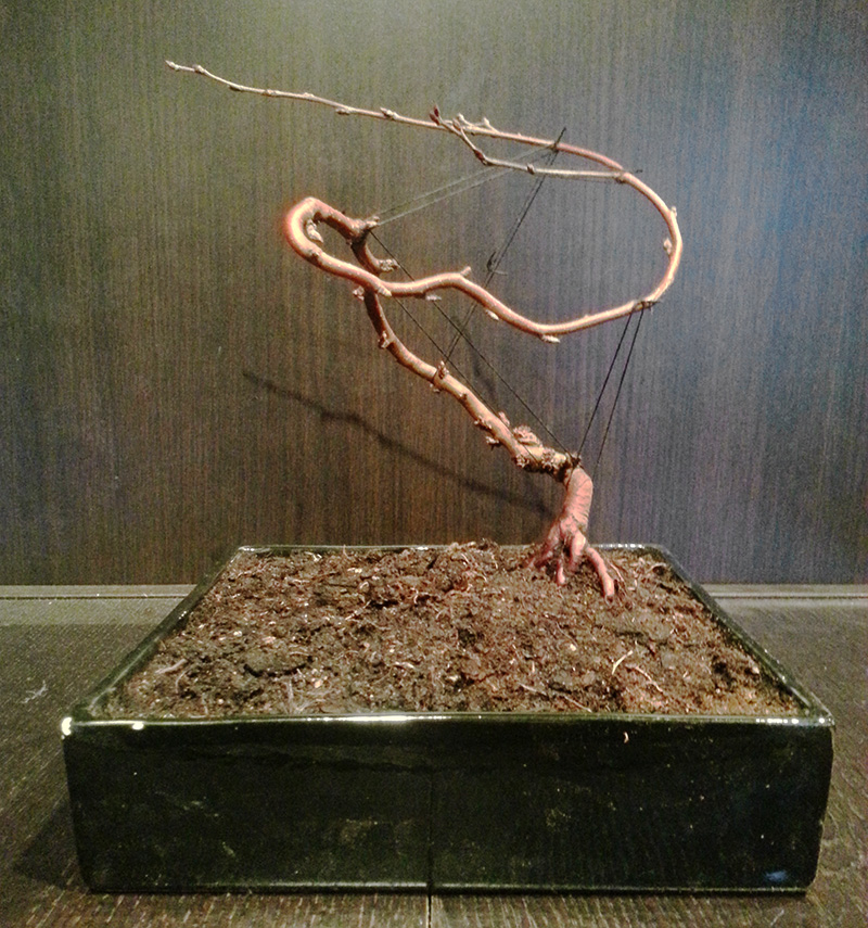 Bonsai von Christian