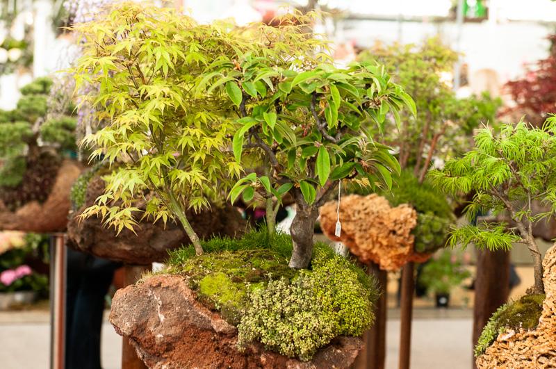 Bäume auf einen Flesen gepflanzt