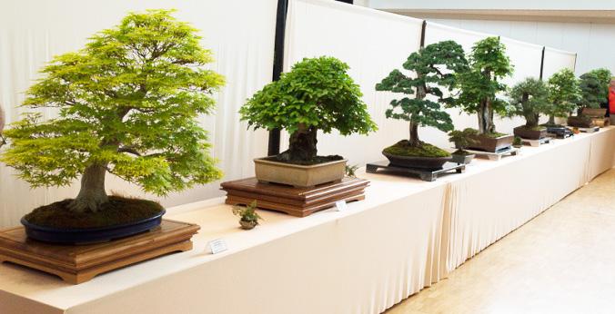 Bonsaiausstellung in Buchen 2014