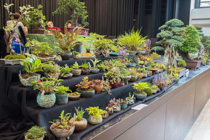 Akzentpflanzen auf der Ausstellung in Buchen 2014