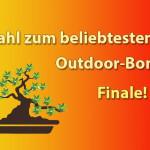 Finale der Outdoor-Bonsai Wahl