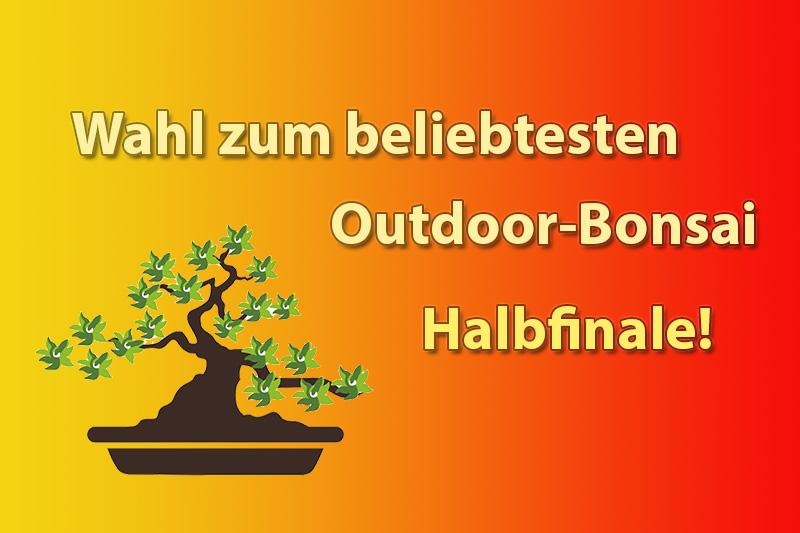 Halbfinale der Outdoor-Bonsai-Wahl