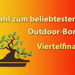Viertelfinale der Outdoor-Bonsai Wahl