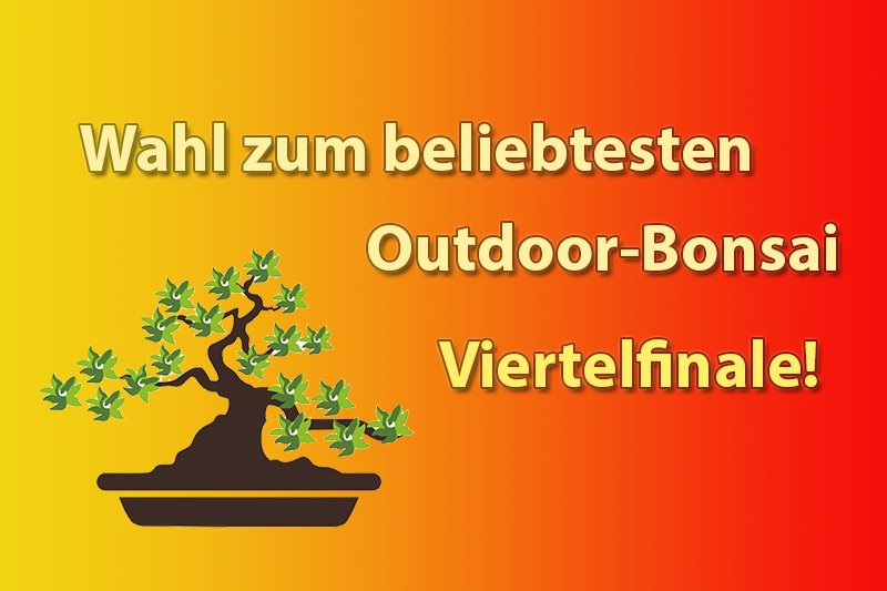 Viertelfinale der Outdoor-Bonsai Wahl