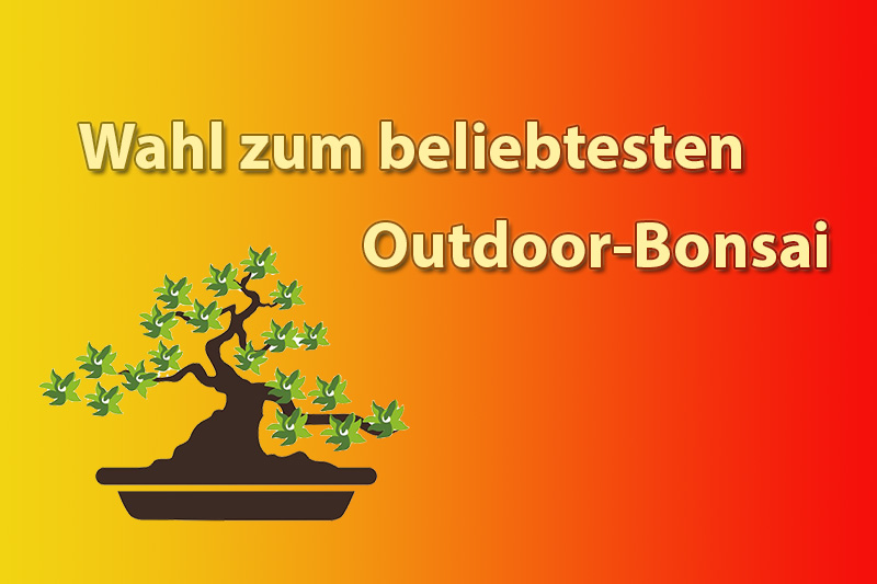 Wahl zum beliebtesten Outdoor-Bonsai
