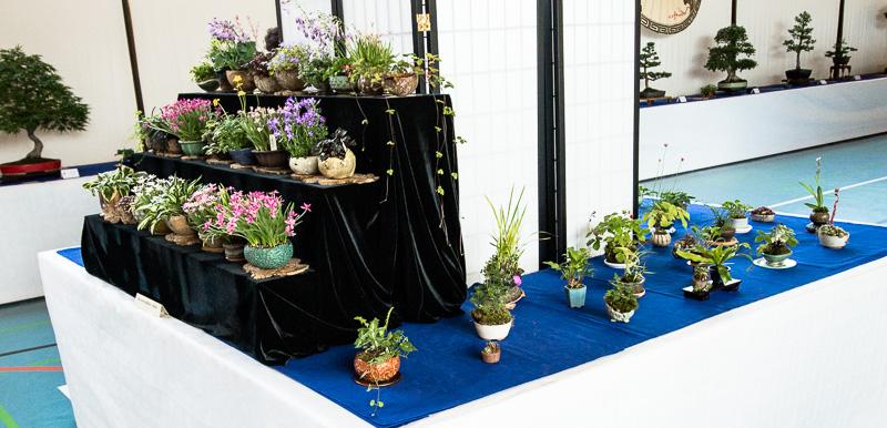 Kusamono auf der Bonsaiausstellung 2014 in Aichtal-Grötzingen