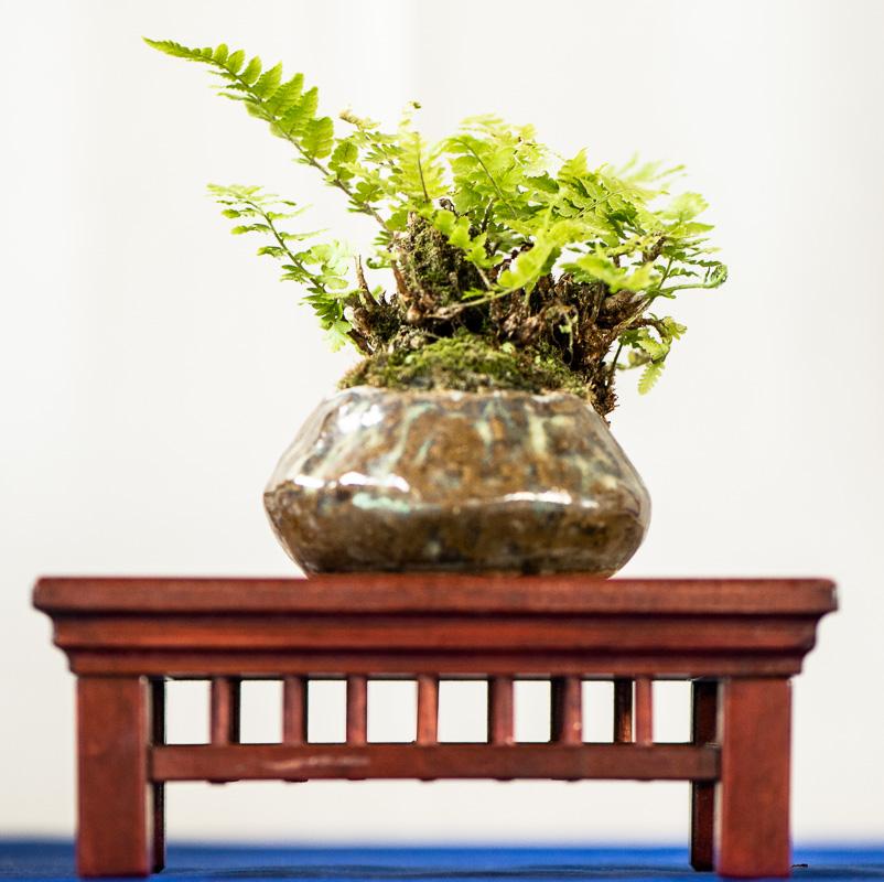 Filigranes Farn als Beistellpflanze