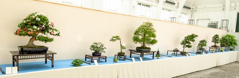 Bonsai-Ausstellung im botanischen Garten München-Nymphenburg