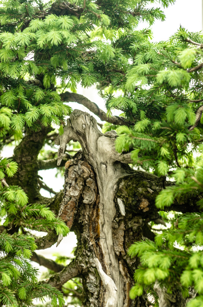 Totholz an einer alten Fichte