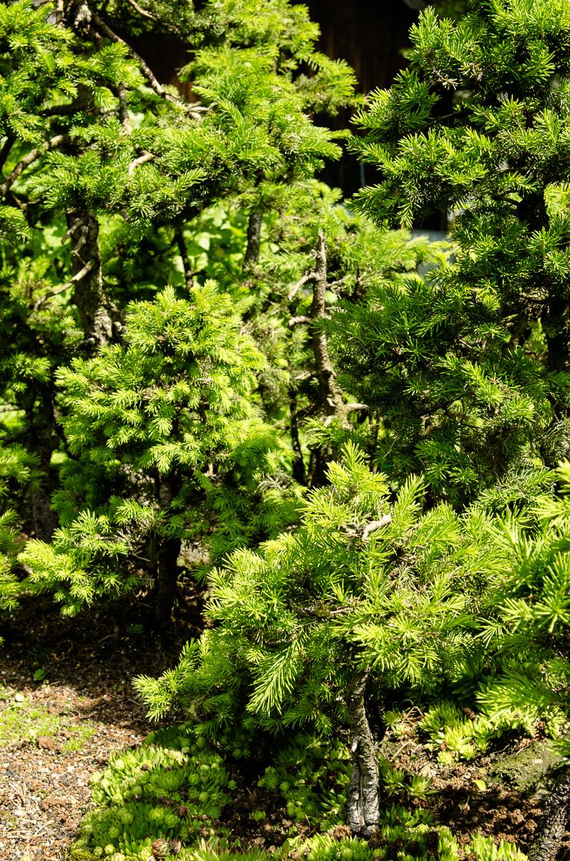 Blick in einen Bonsai-Wald
