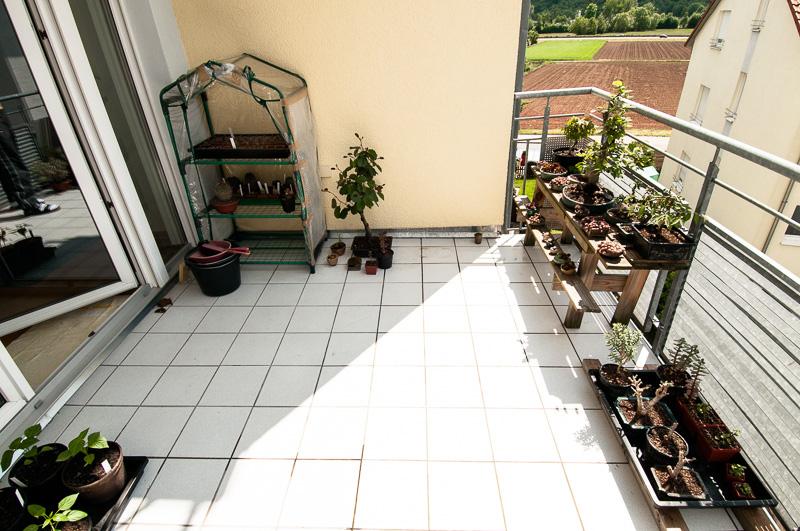 Linke Balkonseite mit Bonsai und Kakteen