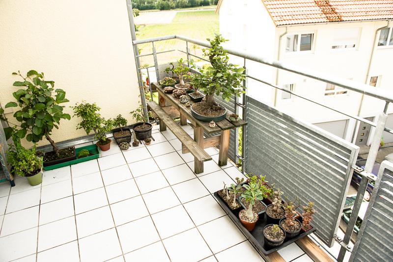Bonsai, Kräuter und andere Sukkulenten