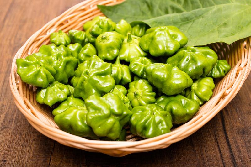 Grüne Chili Mini Bonnet - 2. Ernte