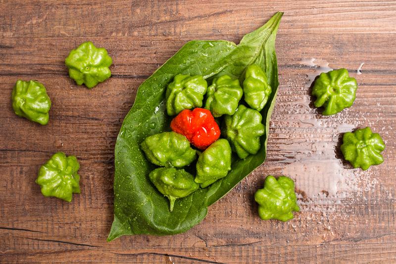 Grüne und rote Chili Mini Bonnet