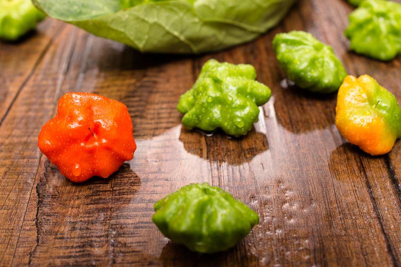 Verschiedenen Reife-Grade Chili Paprika Mini Bonnet