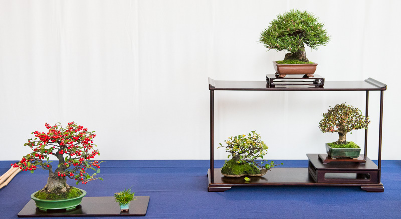 Shohin-Bonsai Display #1