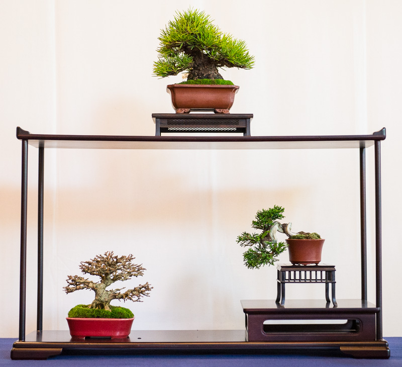 Shohin-Bonsai Display #3